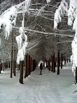 neige dans les bois